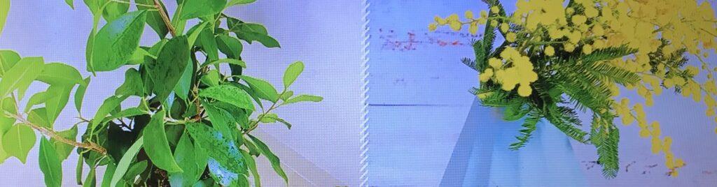 観葉植物 イメージ